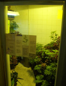Musee de fumar growroom