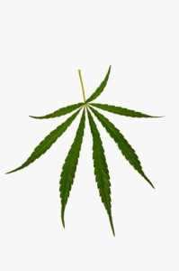 legalise the leaf