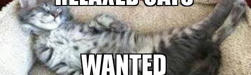 Relaxed cats wanted