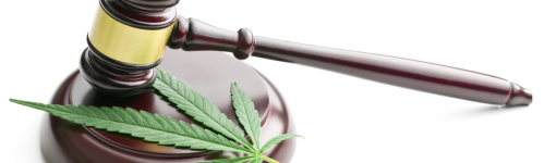 Police persecute medicinal cannabis suppliers – this isn't the kindness or reform we were promised!